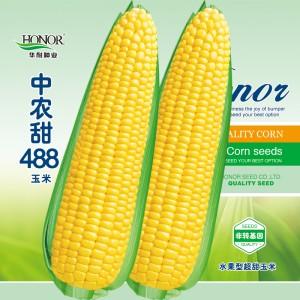中农甜488牛奶香超甜水果玉米种子生吃四季春夏秋种籽非转基因